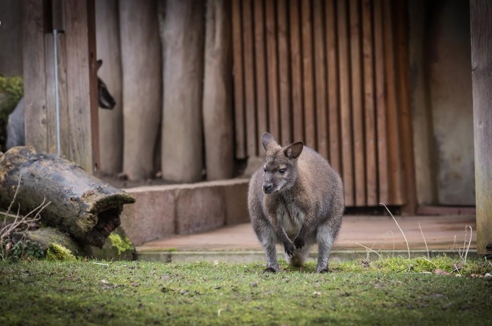 10. Fotowalk - Zoo Halle/Saale